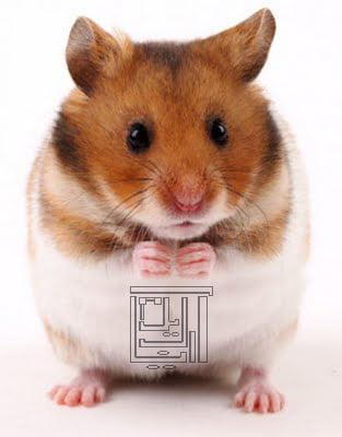 بازی Talking Hamster – موش سخنگو – ساین شده