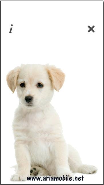 بازی Puppy Talk – توله سگ سخنگو